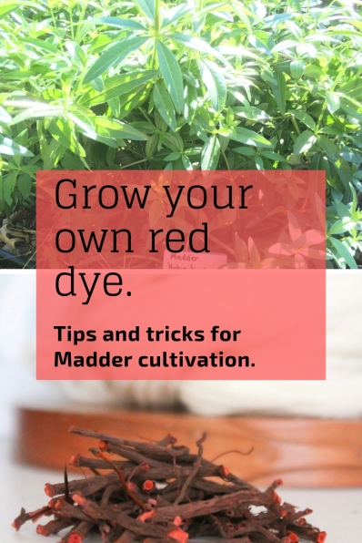 Want your own dye garden? Madder has been THE source for a lightfast red dye since ancient times.