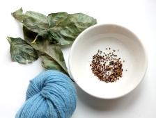 j indigo seeds 2